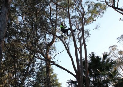 Tree Cutting Company Arborists Epping