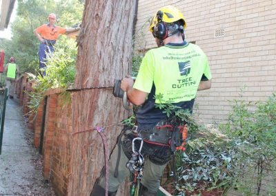 Tree Cutting Company Arborists Cherrybrook