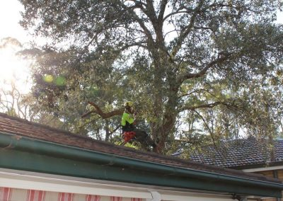Tree Cutting Company Arborists Castle Hill