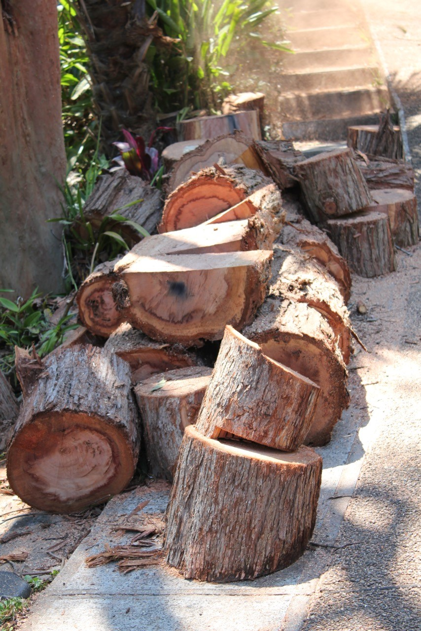 Stump Grinding & Removal Sydney | The Tree Cutting Company