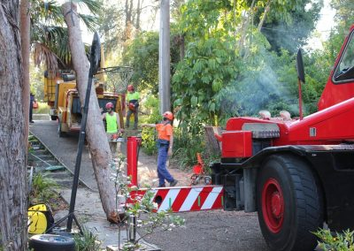 Tree Cutting Company Sydney Arborists