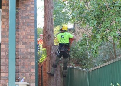 Tree Cutting Company Arborists Sydney