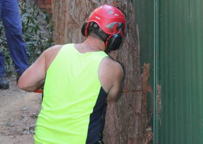 Tree Cutting Company Arborists Beecroft
