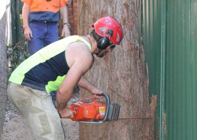 Tree Cutting Company Arborists Cheltenham Sydney