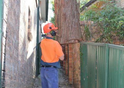 Tree Cutting Company Arborists North Sydney