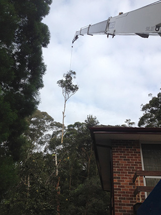 Tree Removal Sydney | Lopping | The Tree Cutting Company