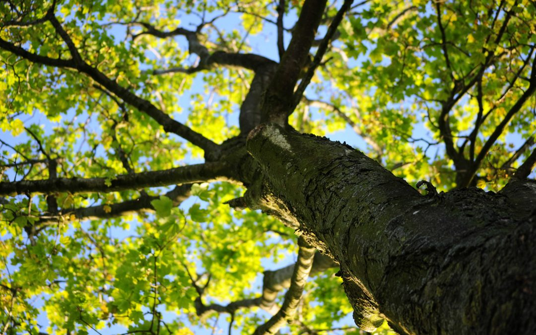 What Trees Are Best Suited for the Changing Climate?