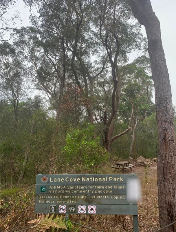 Tree pruning Beecroft - Lane Cove National Park Hornsby