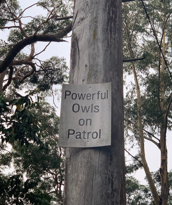 Tree removal Beecroft - Mikey the powerful owl Beecroft