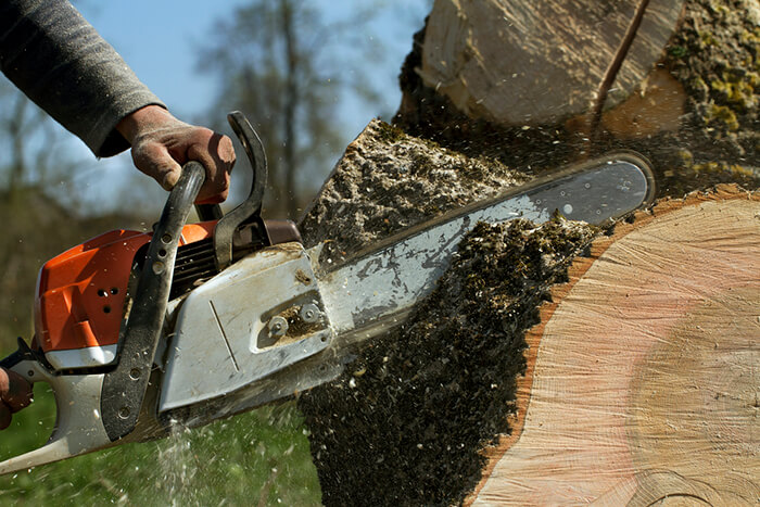 Man cuts a fallen tree in Pennant Hills